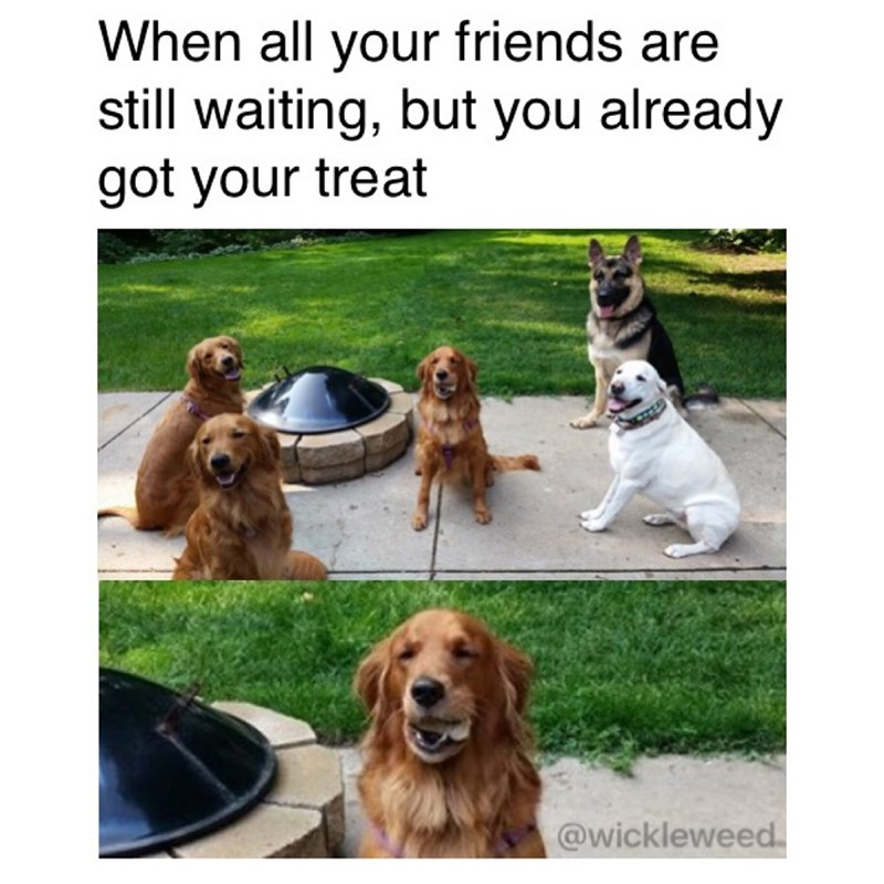 Meme of one dog eating a treat surrounded by other dogs, caption is about when all your friends are waiting for treats but you've already got yours.