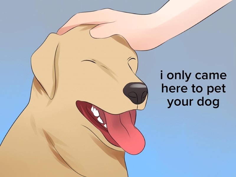 "Funny and relatable image of golden retriever being pet with the text ""i only came here to pet your dog."""