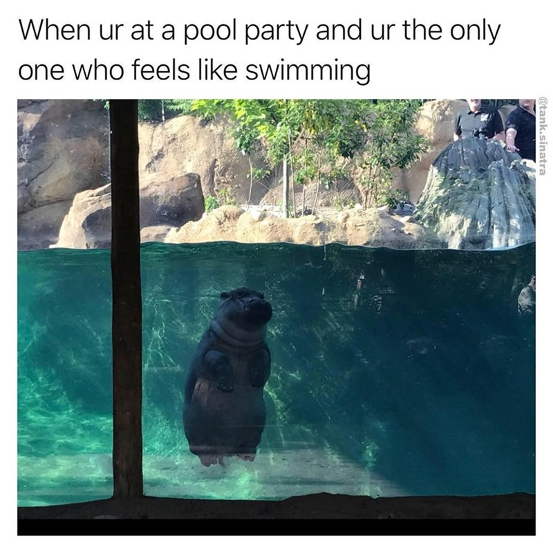 Hippon alone in the pool as the feeling when you are in a pool party and the only one who feels like swimming.