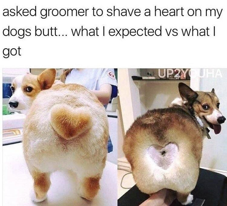 Funny meme about asking your dogs groomer to shave a heart into your dog's butt.