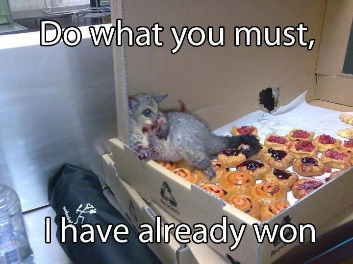 Funyn image of an animal inside a box of pastries, saying do what you want, I have already won. Because they ate some pastries.