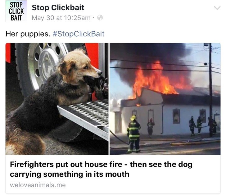Heat - STOP Stop Clickbait CLICK BAIT May 30 at 10:25am Her puppies. #StopClickBait Firefighters put out house fire - then see the dog carrying something in its mouth weloveanimals.me