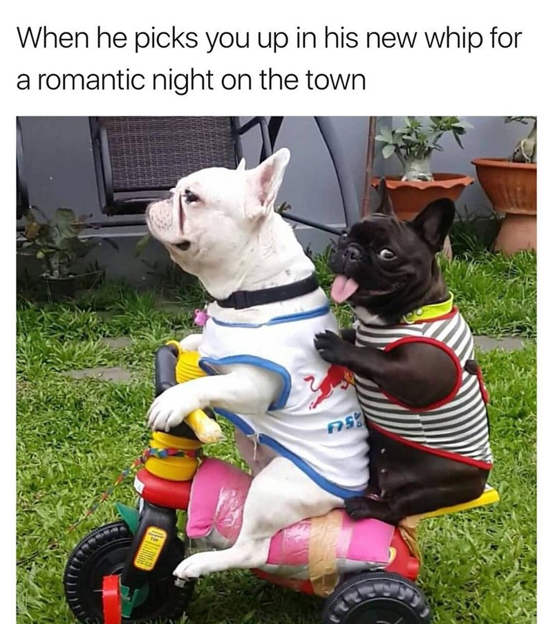 Funny meme about taking a lady out on the town but it's two dogs in a toy car.