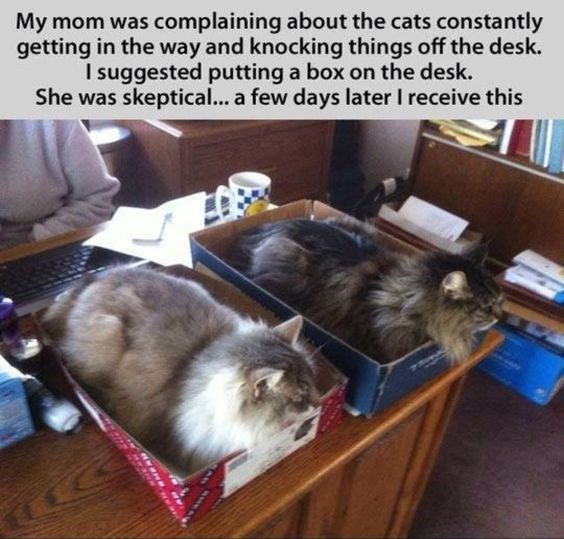 A picture with two cats in separate boxes on the desk - a tip for how to get work done