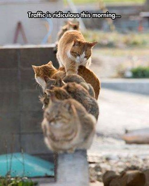 group of cats walking on each other