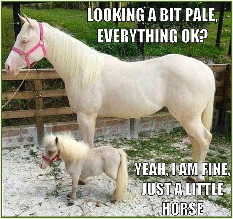 Pun meme of a horse standing next to a pony