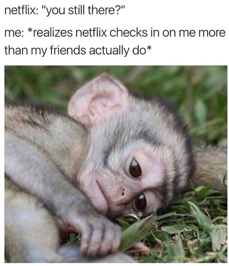 Funny meme about when Netflix asks if you're still there, photo of monkey realizing that Netflix checks on him more than his friends do.