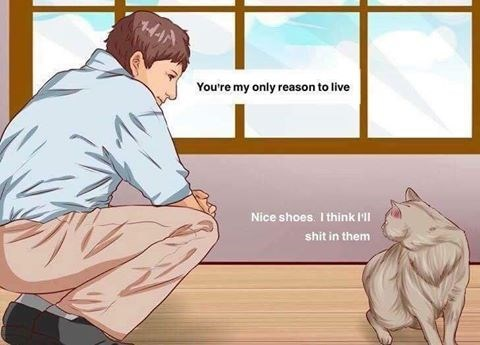 Funny meme in which man tells cat that it is the only reason for him to live, cat says nice shoes, i think i will shit in them.