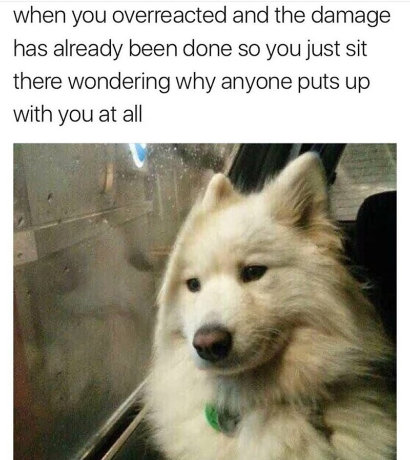 Funny meme featuring a dog staring out a window with regret, supposed to illustrate a time when you overreact and there's nothing you can do about it, and you wonder why anyone puts up with you