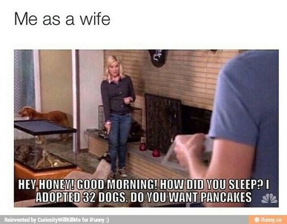 Photo caption - Me as a wife HEY HONEY! GOOD MORNING! HOW DID YOU SLEEP? ADOPTED 32 DOGS. DO YOU WANT PANCAKES Reinvented by CuriosityWillkillMe for iFunny) ifunny.co