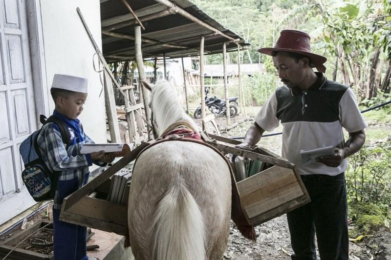 Working animal - tharind