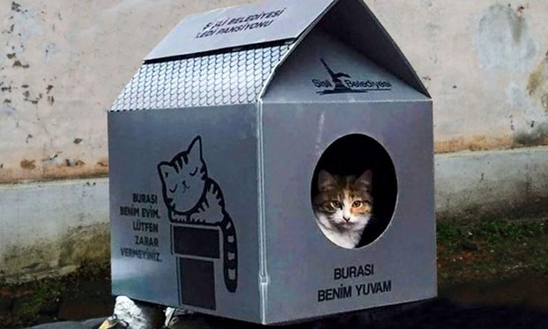 Cat - SPBELEDIYES ON PANSIVOoNU Stel Belecyesu BURAS BENM EVIM UITFEN ZARAR VERMEYINZ BURASI BENIM YUVAM