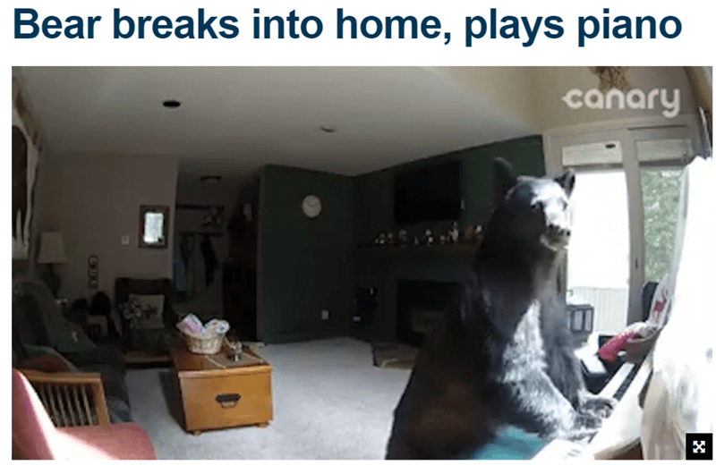 Funny image and news headline where bear breaks into a home and starts playing a piano.