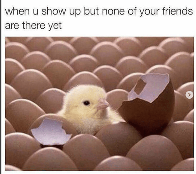 Baby chick hatched out of an egg waiting for all his friend.