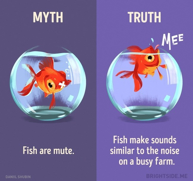 Myth that fish are mute when in truth they make similar noises to farm animals.