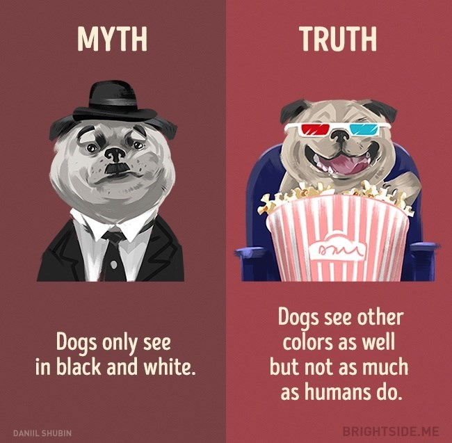 Myth that dogs only see black and white, when in Truth they are just partially colorblind, but can still see some colors.