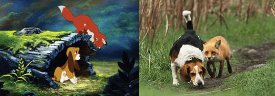 IRL The Fox And The Hound