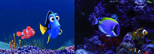 Dory and Nemo real life versions.