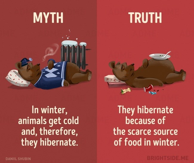 Myth that animals hibernate because they are cold, truth is that they hibernate because the scarce supply of food and water.