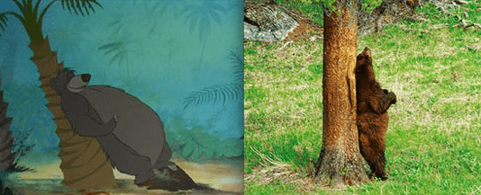 Baloo the bear - in real life leaning against a tree