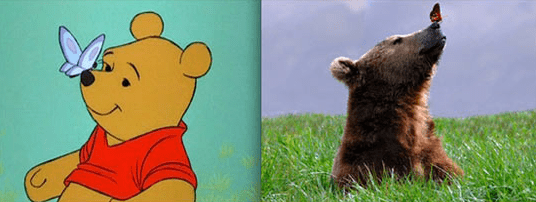 Real life version of Winnie The Pooh bear.