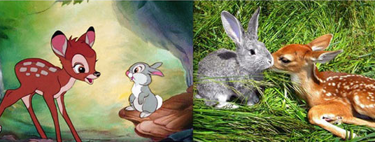 real life versions of Bambi and Thumper