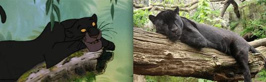 Bagheera puma taking a nap in real life.