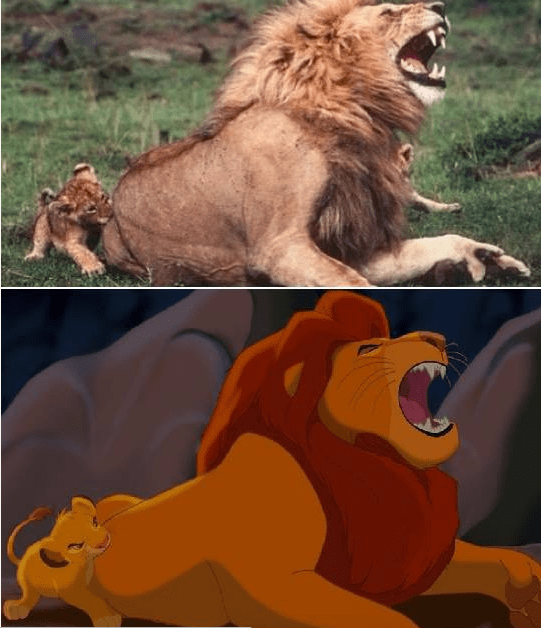 Real life version of the Lion King - Simba biting Mufasa in the ass.