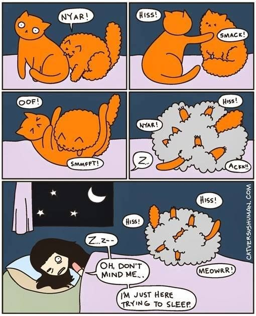 Cartoon about trying to sleep while your cats fight in the background.