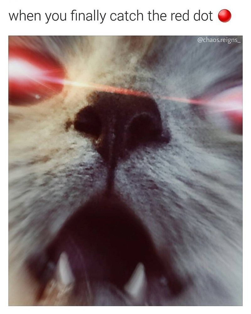 best meme of a cat who caught the red laser light and its eyes are lit red