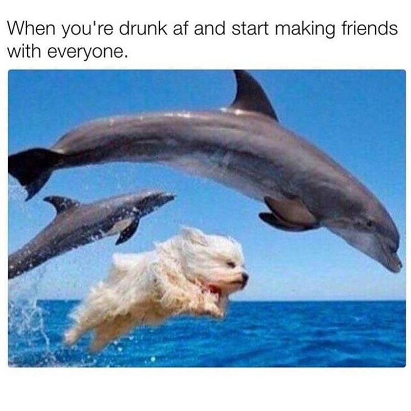 Funny meme about when you're drunk and making friends with everyone, image that represents this is a dog leaping through the air with two dolphins.