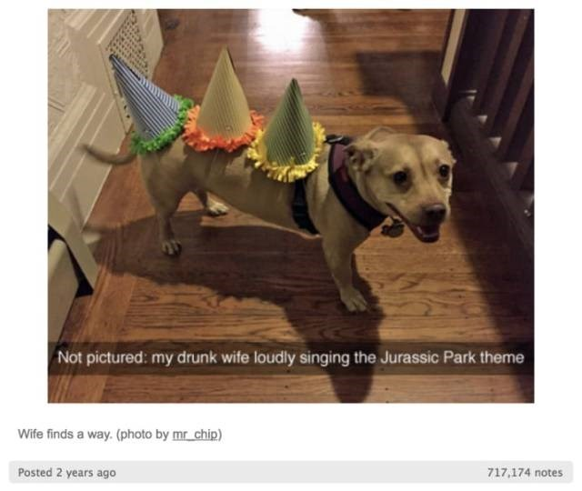 Dog - Not pictured: my drunk wife loudly singing the Jurassic Park theme Wife finds a way. (photo by mr chip) Posted 2 years ago 717.174 notes