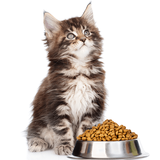 Kitten looking innocent next to heaping stainless steel bowl of cat food.