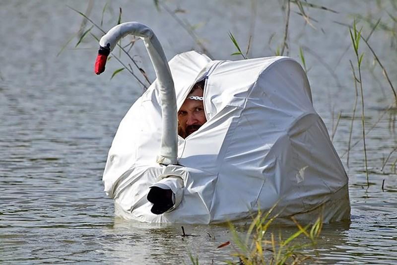 nature photographer - Swan