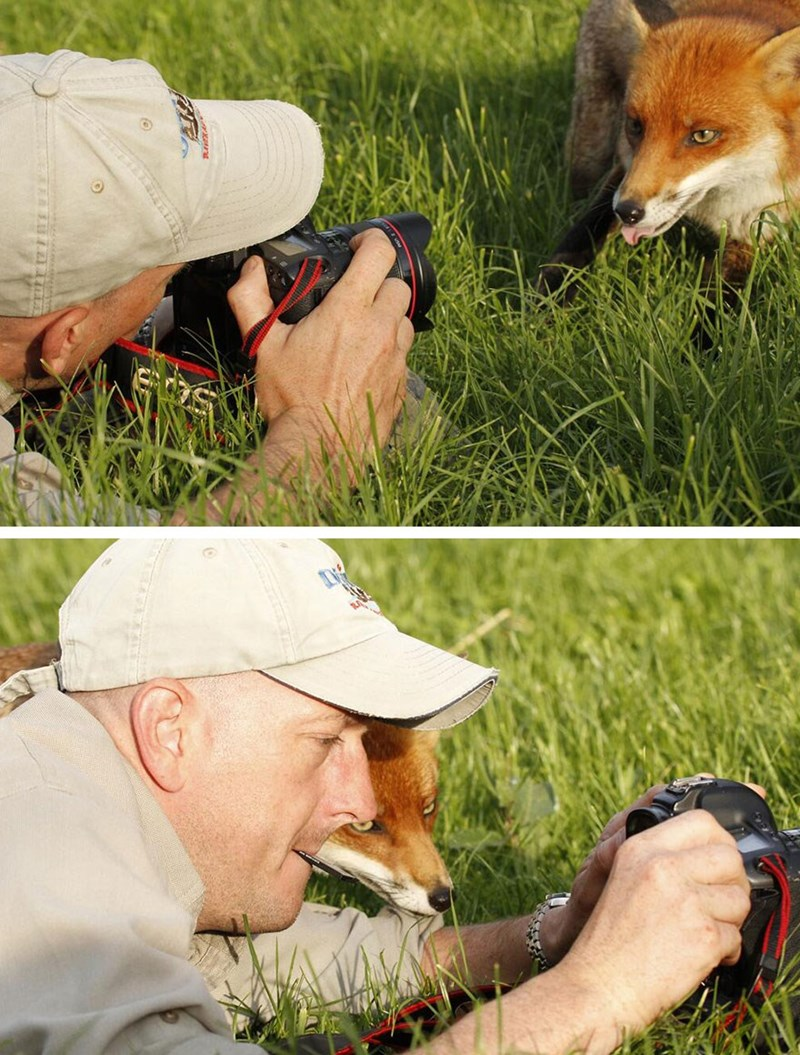nature photographer - Canidae