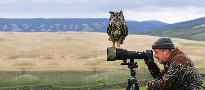 nature photographer - Bird of prey