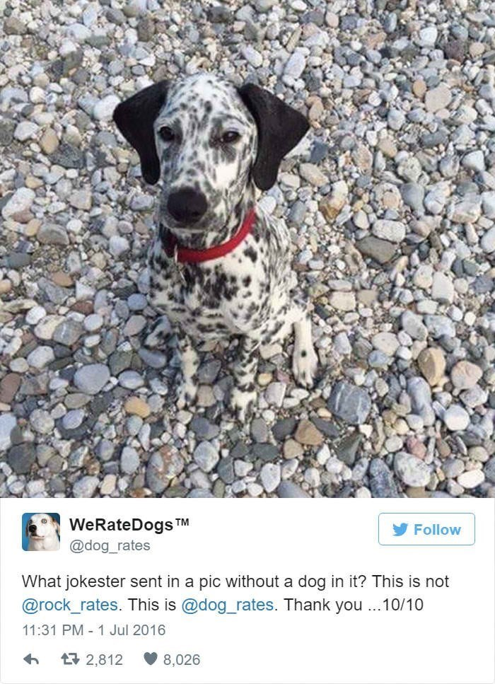 Dog breed - WeRateDogs @dog_rates TM Follow What jokester sent in a pic without a dog in it? This is not @rock_rates. This is @dog_rates. Thank you ..10/10 11:31 PM 1 Jul 2016 t2,812 8,026