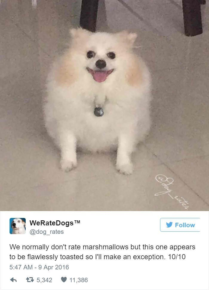 Dog - tes Follow WeRateDogs @dog_rates TM We normally don't rate marshmallows but this one appears to be flawlessly toasted so I'll make an exception. 10/10 5:47 AM 9 Apr 2016 11.386 43 5,342