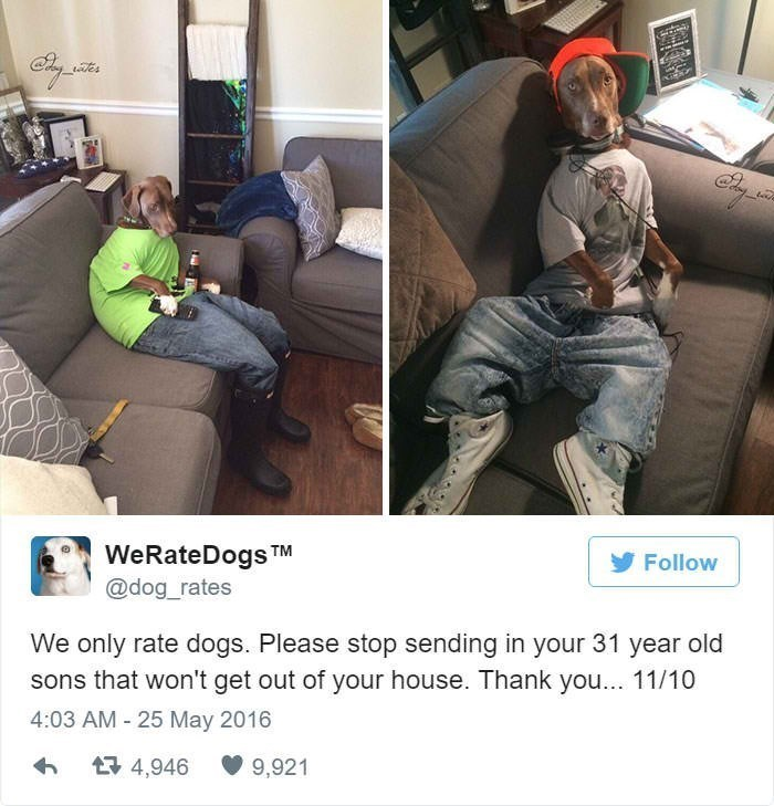 Couch - WeRateDogsTM Follow @dog_rates We only rate dogs. Please stop sending in your 31 year old sons that won't get out of your house. Thank you... 11/10 4:03 AM - 25 May 2016 4,946 9,921