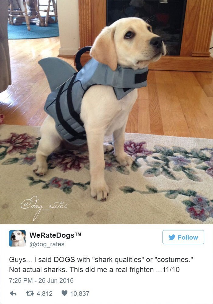 """Dog - aes WeRateDogs TM Follow @dog_rates Guys... I said DOGS with """"shark qualities"""" or """"costumes."""" Not actual sharks. This did me a real frighten ...11/10 7:25 PM-26 Jun 2016 13 4,812 10,837"""