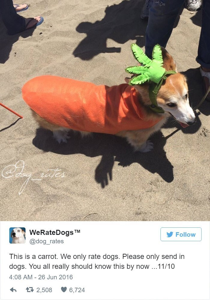 Dog - aes WeRateDogs TM Follow @dog_rates This is a carrot. We only rate dogs. Please only send in dogs. You all really should know this by now..11/10 4:08 AM 26 Jun 2016 17 2,508 6,724