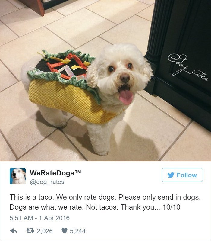 Dog - iy _aes Follow WeRateDogs TM @dog_rates This is a taco. We only rate dogs. Please only send in dogs. Dogs are what we rate. Not tacos. Thank you... 10/10 5:51 AM - 1 Apr 2016 5,244 2,026
