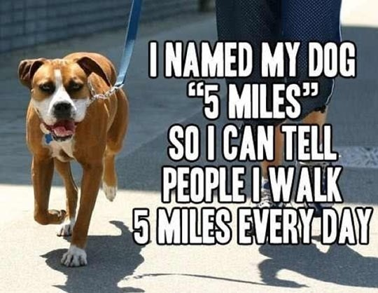 A meme of a guy naming his dog 5 miles so he can say he walked 5 miles everyday