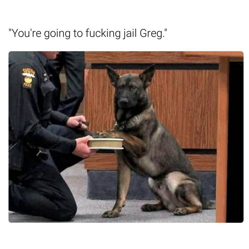 "Funny meme of a dog swearing an oath in court, says ""you're going to jail, greg."""