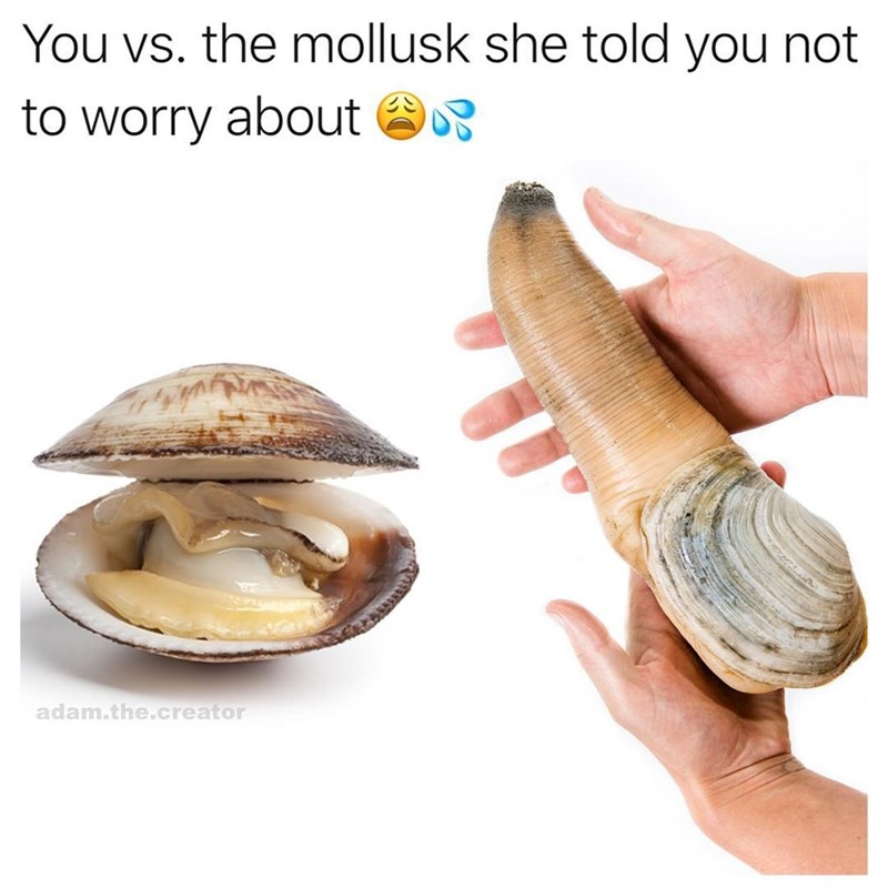 Funny you vs the guy she tells you not to worry about meme, featuring a regular clam and then a large geoduck.