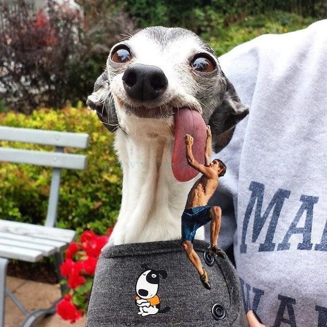 Dog - MA A