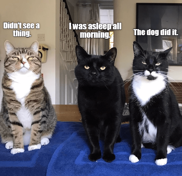 A cat meme and three cats blaming the dog for something they did