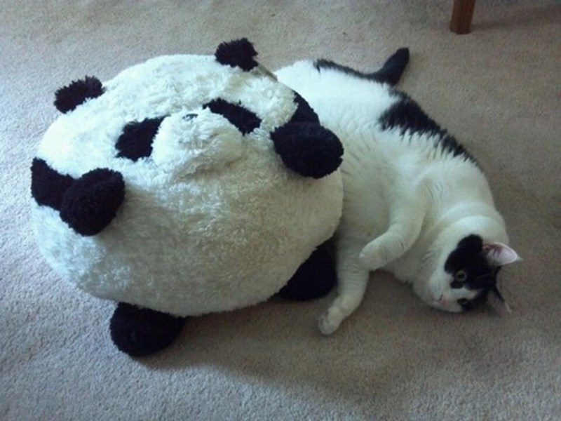 Black and white large fat cat next to round panda doll