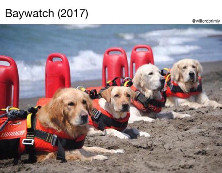 Funny meme about dogs looking like lifeguards, joke about baywatch,