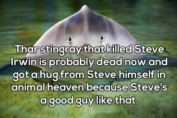 Adaptation - Thar stingray that killed Steve Irwin is probably dead now and gota hug from Steve himself in animal heaven because Steve's a good guy like that.